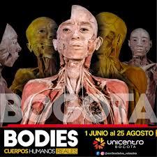 Bodies: la exposición de cuerpos reales se encuentra en Bogotá