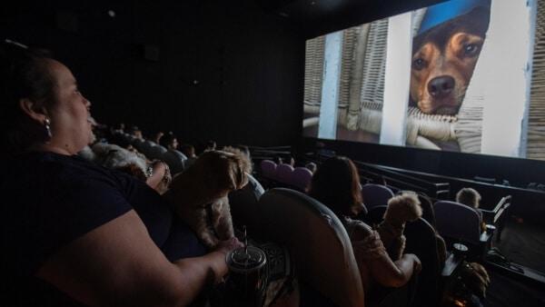 """Decenas de perros fueron invitados a cine al pre estreno del film """"Mis Huellas a Casa"""""""